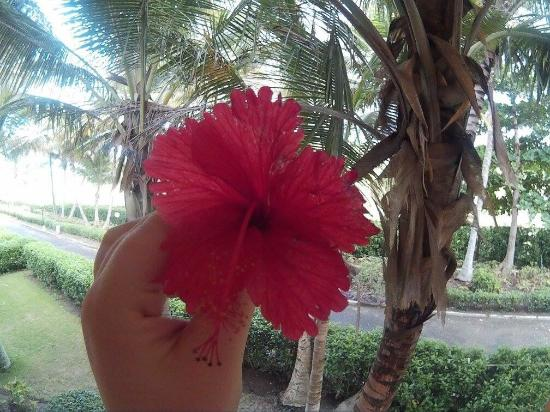 ClubHotel Riu Merengue: photo0.jpg