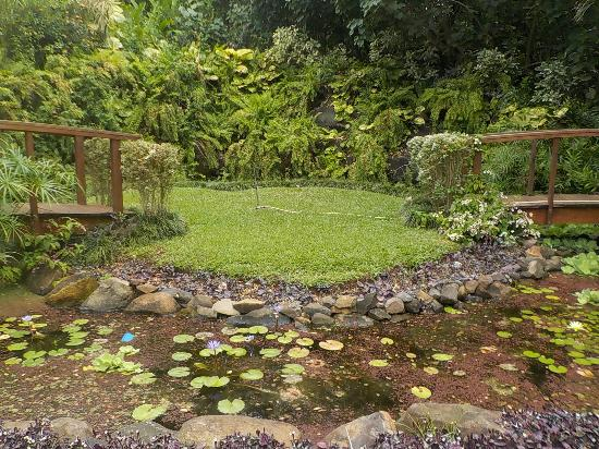 Area for wedding ceremonies Picture of Maire Nui Botanical Gardens