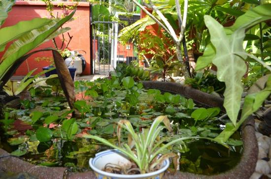 Mai Tai Resort: Part of garden