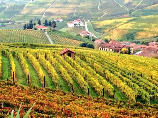 ‪‪Villanova d'Asti‬, איטליה: Autumn colours in Barolo wine country‬