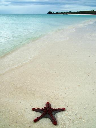 Princess Salme Inn: Star Fish On Our Beaches