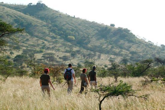Campi ya Kanzi: a walk from the camp