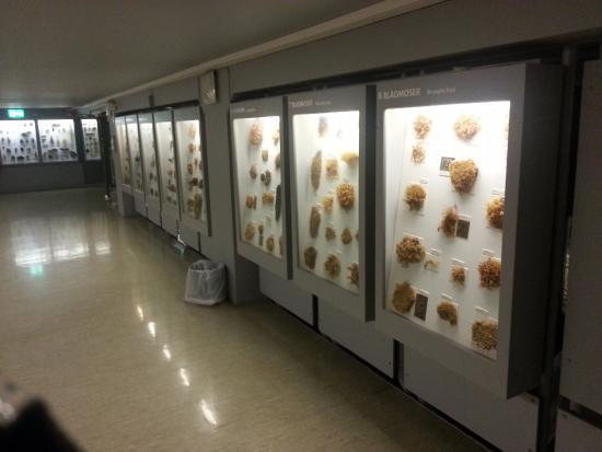 NTNU University Museum