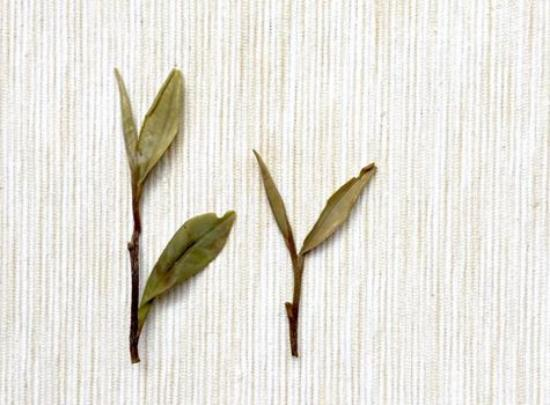 Tetereria: tea leaf