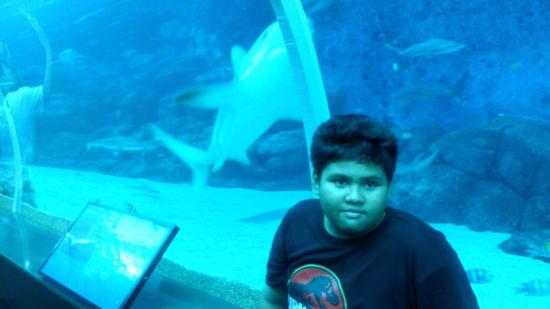 Marine Life Park : Shark
