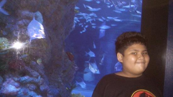 Inside the fabulous Marine Life Park