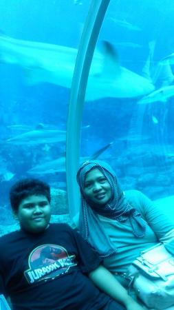 海洋生物園