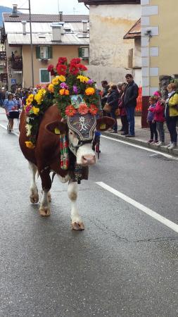 """Arnica Mountain Hotel: mucca addobbata per la """"Desmontegada"""""""