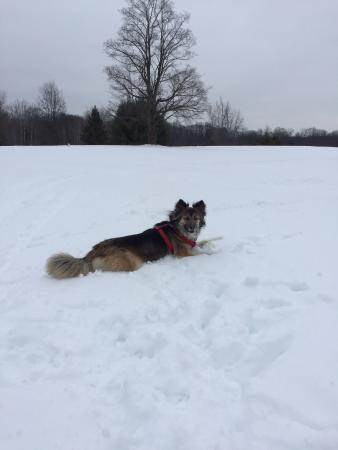 Coyote Crossing Resort : Enjoying the snow
