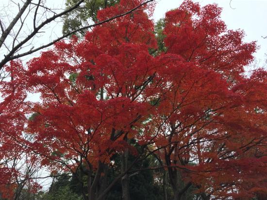 Warabi, Japão: photo0.jpg