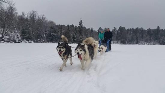 Ely, MN: Beautiful dogs