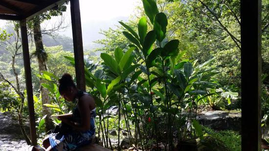 Vieux-Habitants, Guadeloupe : Grivelière 1