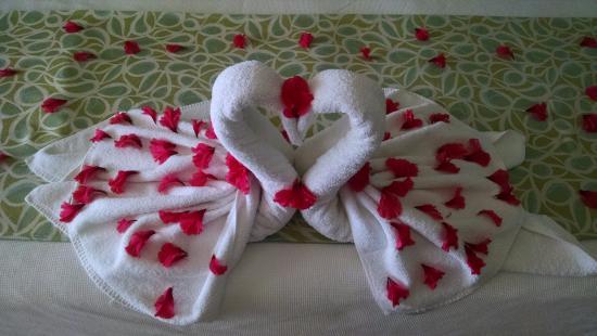 Tambor, Costa Rica: Honeymoon - Love Swans on bed