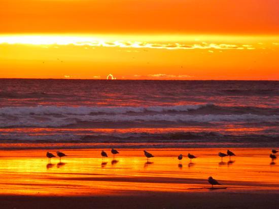 Long Beach Seagulls