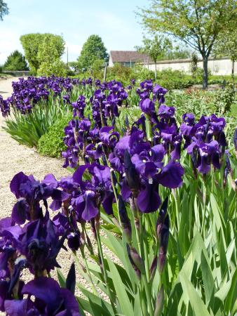 Azay-le-Ferron, Prancis: Iris