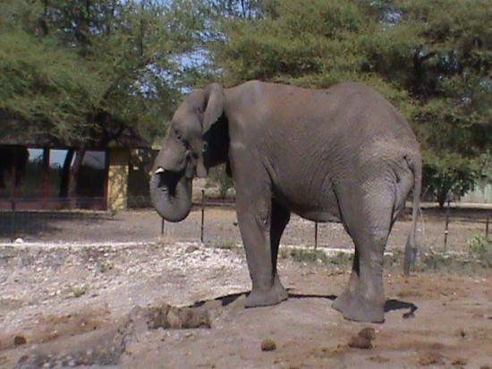 Tau Game Lodge: Elefante