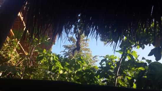 Playa Maderas, Nicaragua: Monkey Fun