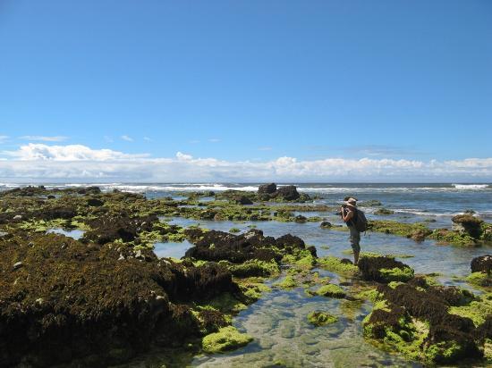 Shipwreck Hiking & Canoe Trails: Green coastal bloom