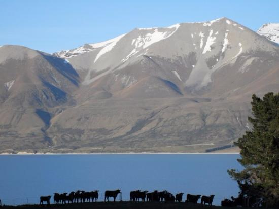Canterbury Region, Nueva Zelanda: Take at a sheep shearing station