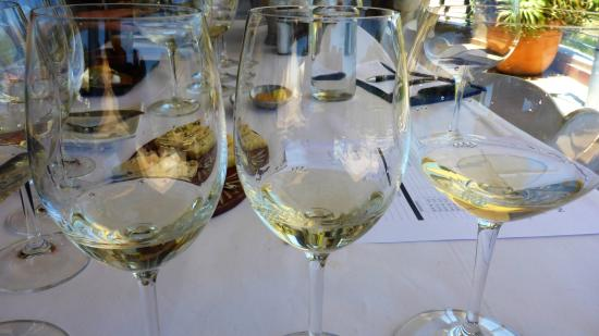 Creation Wines: Weintasting
