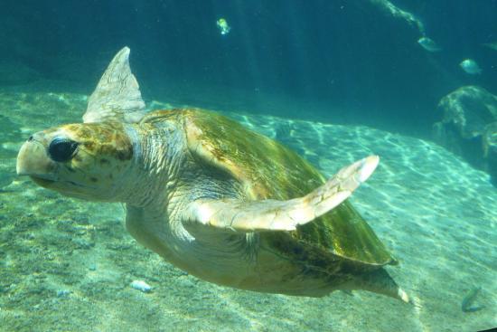 Sea World Picture Of Ushaka Sea World Aquarium Durban