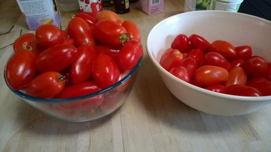 Hawkley, UK: Tomatoes from the polytunnels