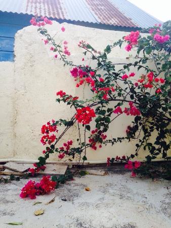 Poppy Hostel Curacao: photo3.jpg