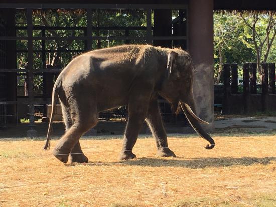 Dusit Zoo - Picture of Dusit Zoo, Bangkok - TripAdvisor
