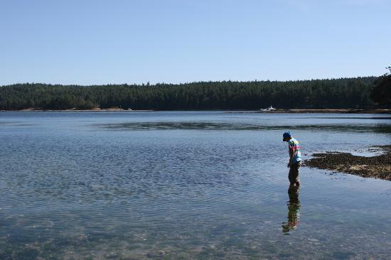 Gabriola Sands Provincial Park: Many sea creatures