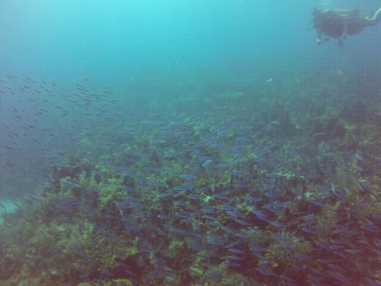 Corn Islands, Nicaragua: el arrecife