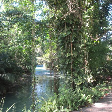 Beautiful Scenery Picture Of Martha Brae River Montego