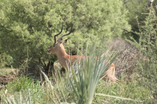 Provincia de Limpopo, Sudáfrica: Old Impala