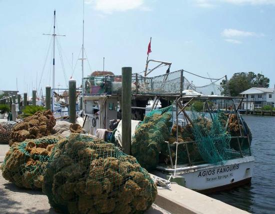 tarpon springs sponge docks picture of tarpon springs sponge docks rh tripadvisor com sg