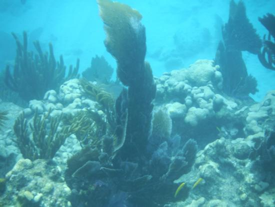 Strike Zone Charters: The underwater terrain.