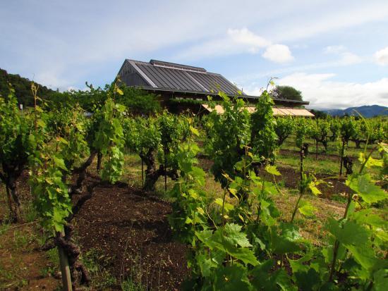 Abaluche Wine Company