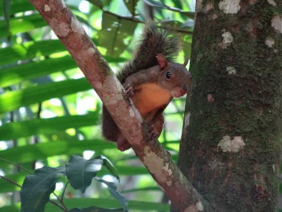 écureuil, crique morthium matoury