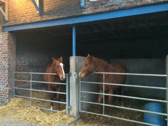 Gouy-sous-Bellonne, França: La compagnie des chevaux