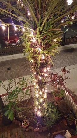 44 Spanish Street: One of the decorated Palm trees outside of our room