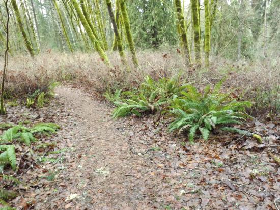 Courtenay, Kanada: Nature trails thru the Park