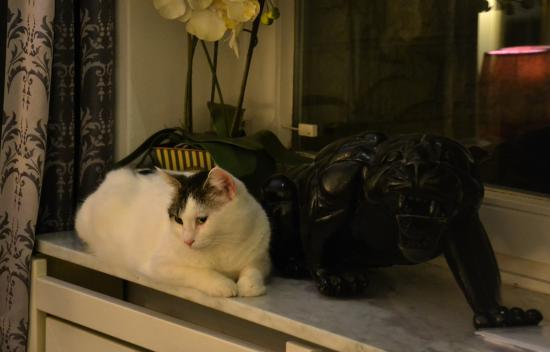 City-Apartments am Park: Owners cat liked to stay in our room