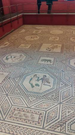 Römisch-Germanisches Museum: Dionysus Mosaic