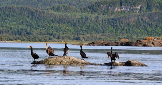 Cormorans island picture of parc national du bic le for Parc national du bic