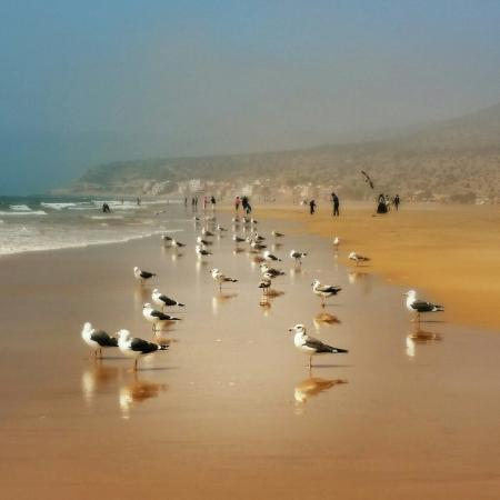 Taghazout Beach : IMG_20151231_181402_large.jpg