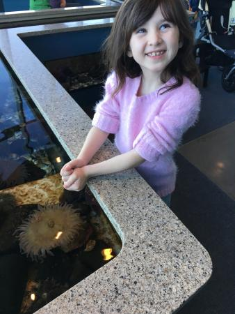 Shaw Ocean Discovery Centre: Our visit. Melody is 6 yo.