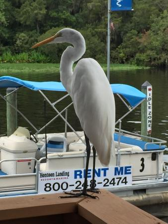 DeLand, FL: I think the bird is trying to hire himself out for parties...oh wait, no...that sign's for the b