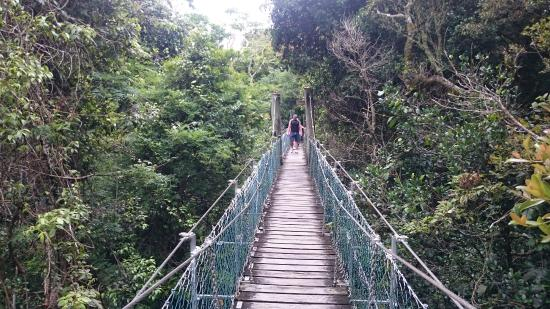 O'Reilly's Rainforest Retreat, Mountain Villas and Lost World Spa : Tree top walk
