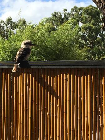 Montrose, Australien: Birdlife