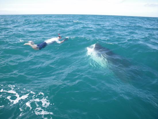 Great White Shark Boat Tours California