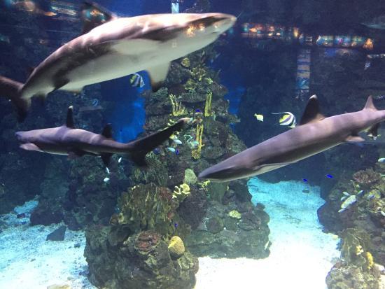 Picture Of L Aquarium De Barcelona