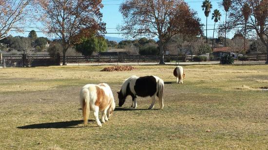 Solvang, CA: Quicksilver Ranch